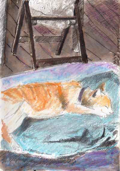 ACE.025-cat on blanket 160426-2