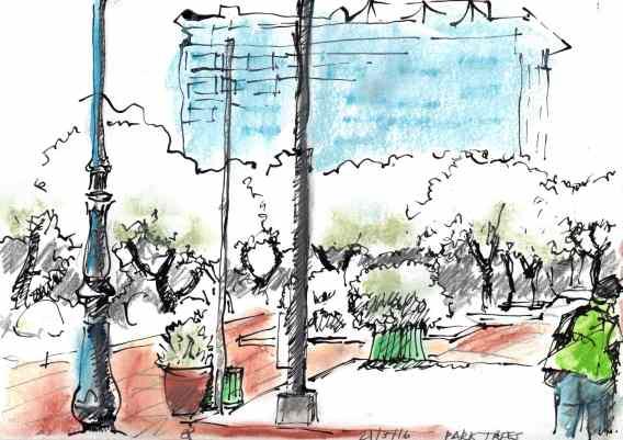 ACE.049c-park trees 160521-2
