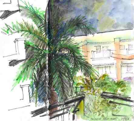 ACE.088-raining on palm tree 160629-2
