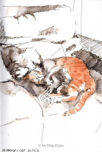 ace-171-dreaming-cat-160920-2-wm