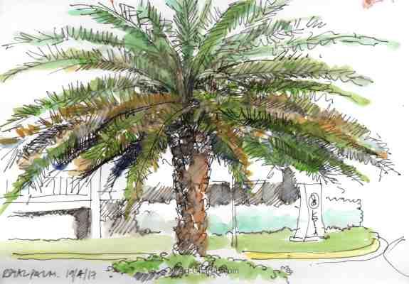 ACE.364-royal palm 170419-2-wm